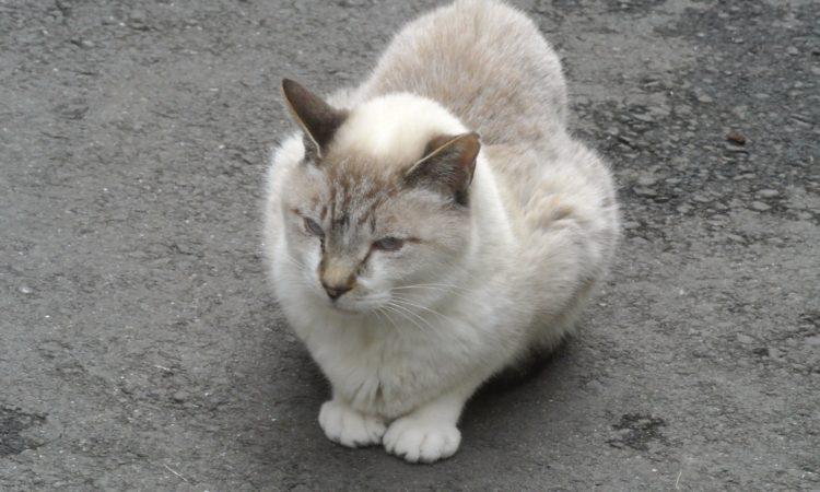 猫に近づきながら写真を撮ってみた。